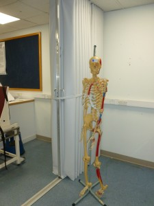 folding fabric room divider in a hospital ward with a skeleton